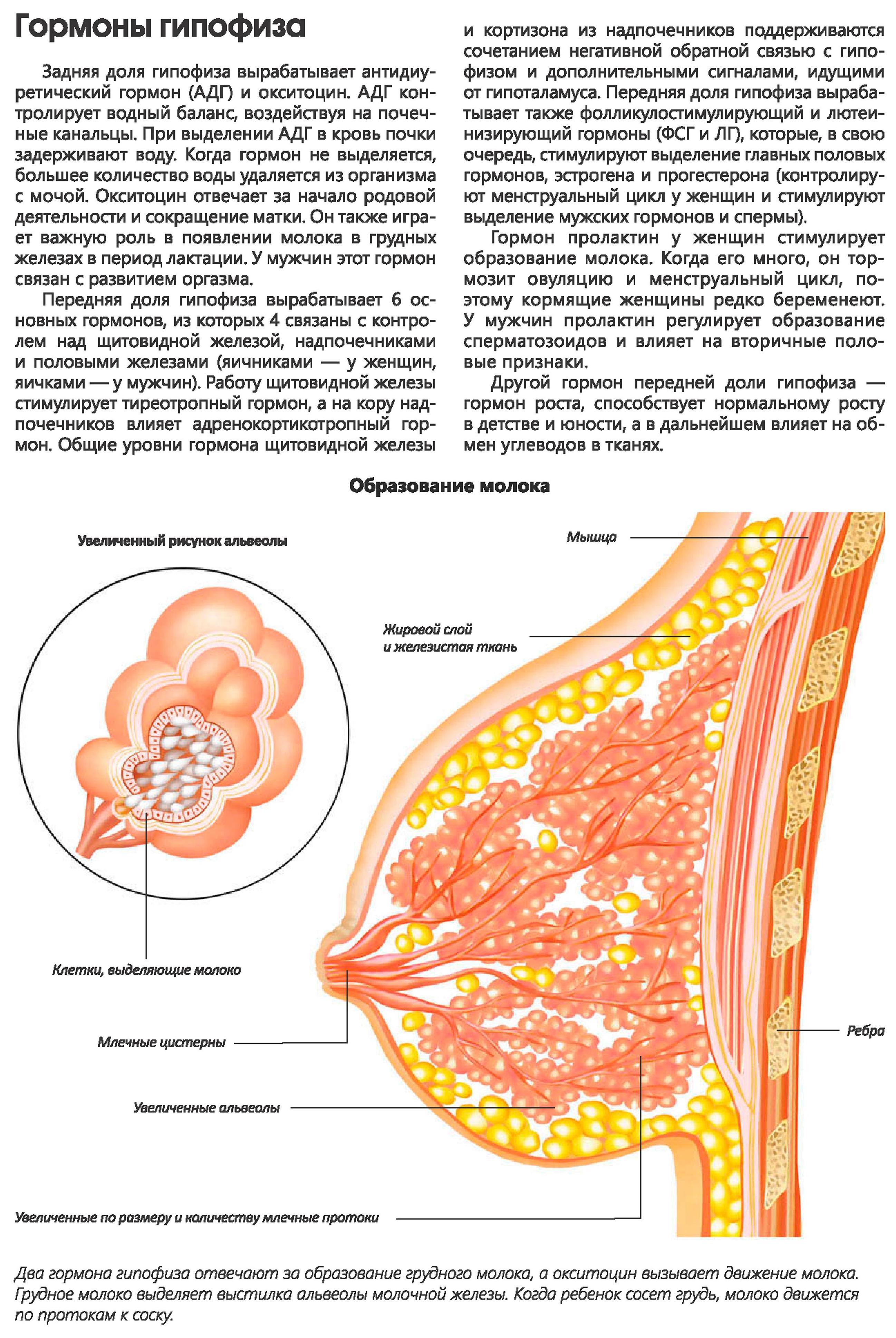 endokrinnoy-sistemi-spermatozoidi
