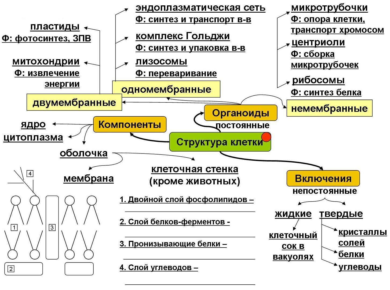 Заполни схему химический состав клетки
