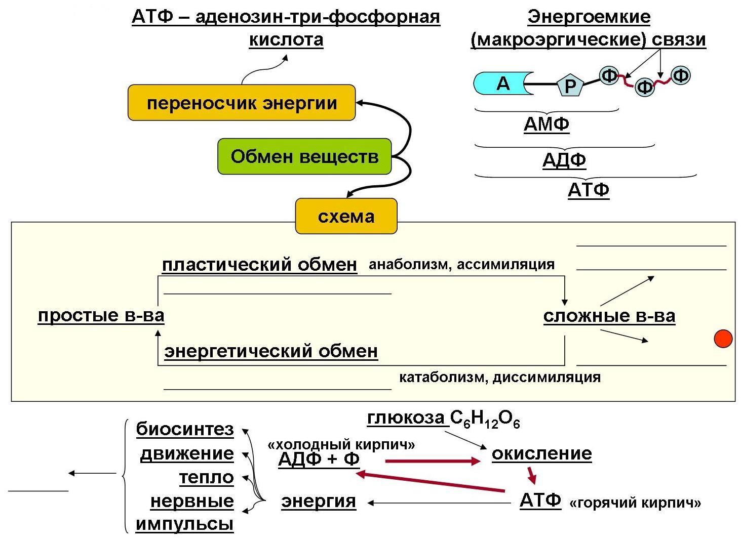 Схема обмена жиров у человека